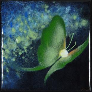 Lise Bougault-Brousseau - Papillondenuit