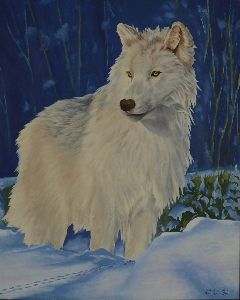Donald Roy - Loup arctique